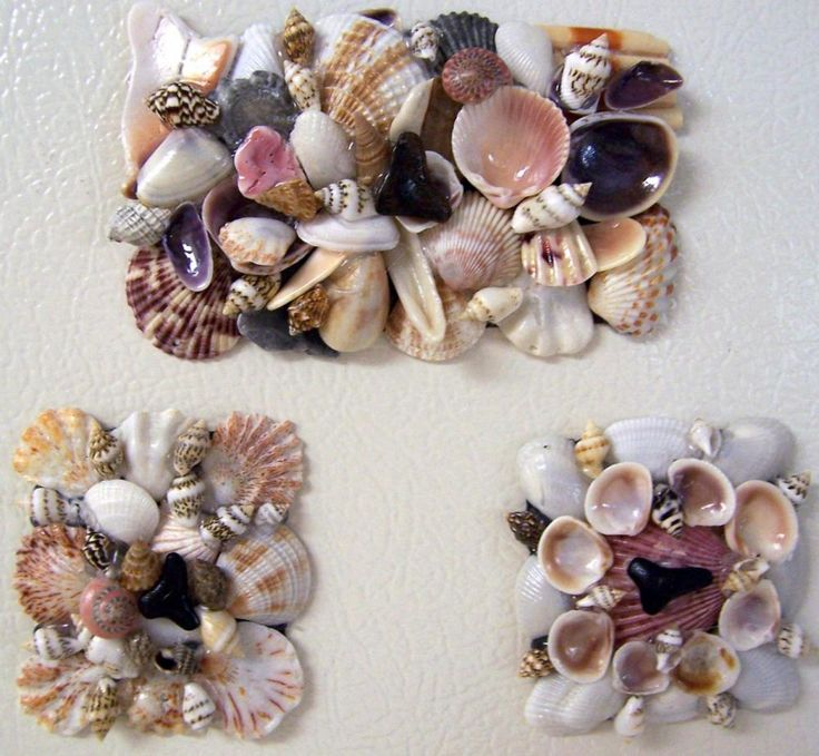 Sea Shells Kitchen Magnets favor idea with the