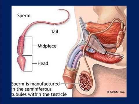 Impotensi adalah Ketidakmampuan Penis melakukan Ereksi. temukan cara pengobatannya di : http://www.obatimpotensiherbal.com atau http://www.storepasutri.com/gasa.html