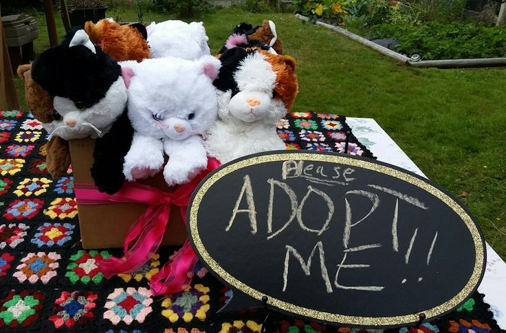 Diy Stuffed Animals Order From Zoo Factory Comes With