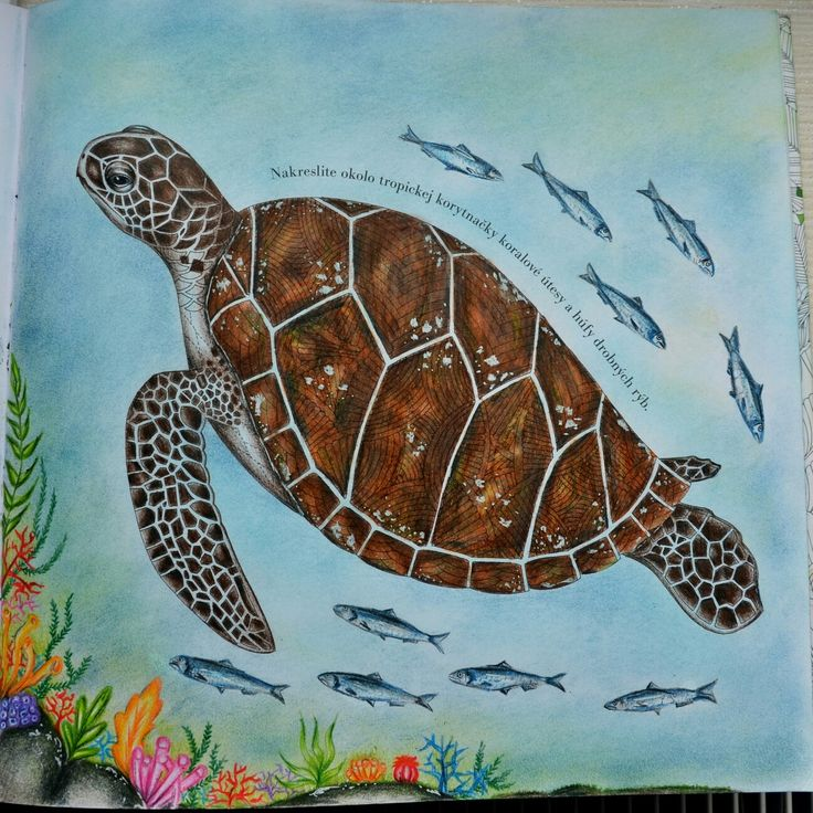Milliemarotta Milliemarottacoloringbook Milliemarottatropicalwonderland Coloring Coloringbook Milliemarottacolouringbook Tropicalwonderland