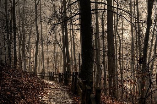 .: Beautiful Trees, Into The Woods, Mood Sets, Art, Dark Wood, Dark Forests, Photography, Sets Inspiration, Black Dark Shades Dusk
