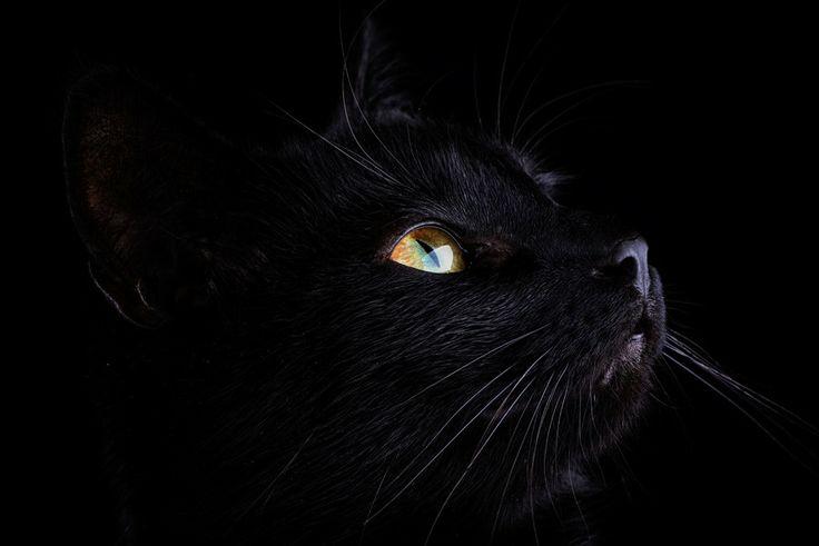 Black Cat by Mark Johnson on 500px