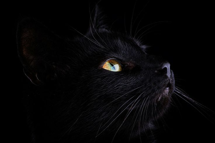 Black Cat by Mark Johnson on 500px
