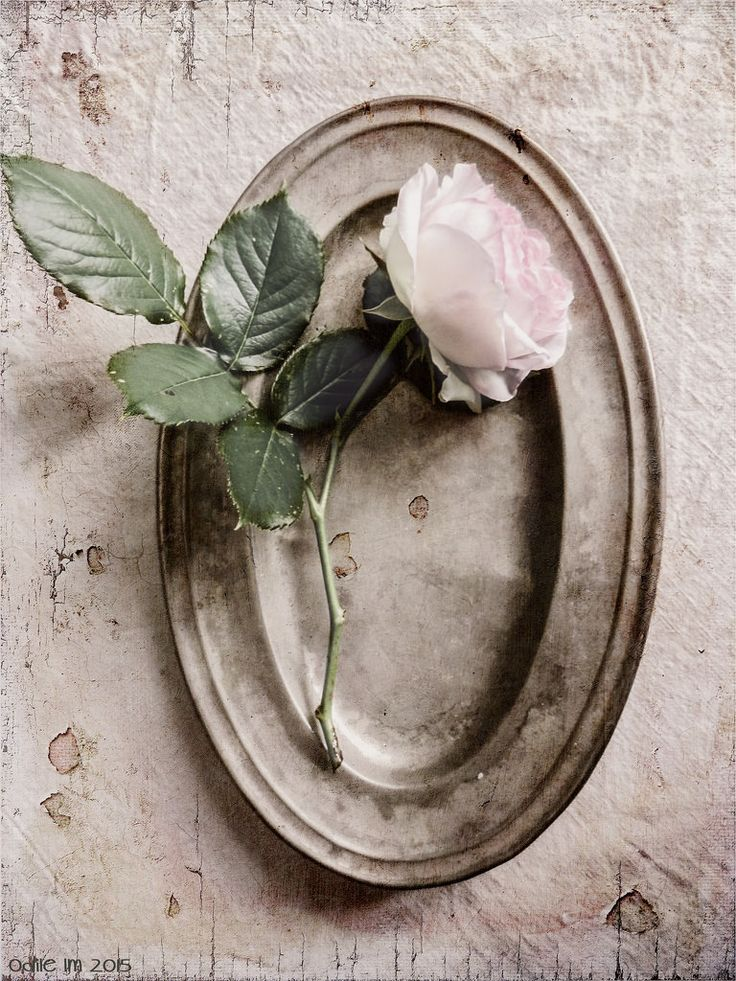 A rose on an old pewter dish... | odile lm