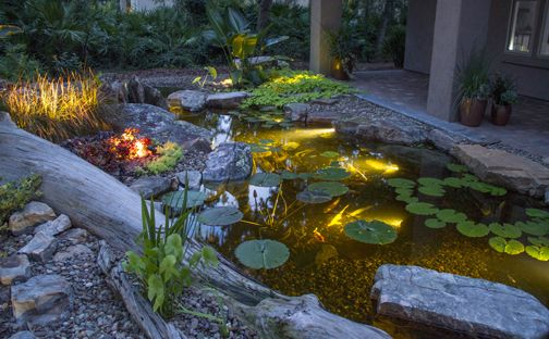 1000 images about pond project on pinterest gardens for Garden pond 101