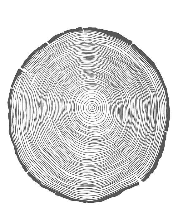 tree rings drawing wwwimgkidcom the image kid has it