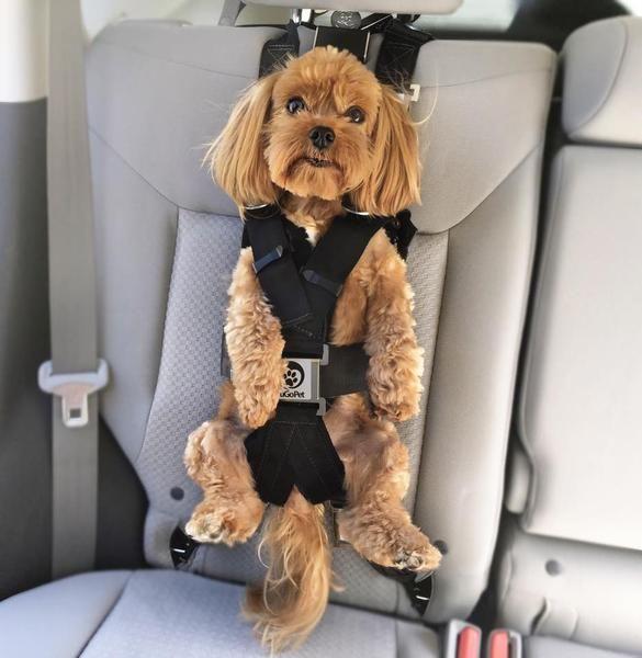 The Rocketeer Pack Multifunctional Harness Dog Seat Belt Dog