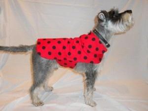 diy doggy clothes!