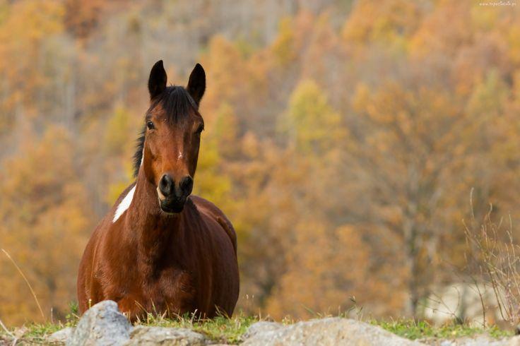 Koń, Trawka