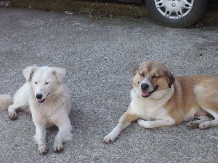 Ursoaica și Clontz