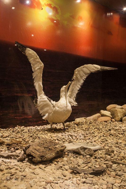 Exposições. Museu Oceanográfico da Univali. Endereço: Avenida Sambaqui, 318 - Santo Antonio, Piçarras - SC, 88380-000. http://www.univali.br/institucional/museu-oceanografico-univali/