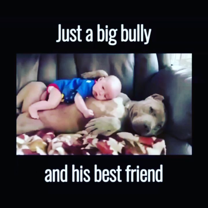 The Most Sweet Gifts For Your Friends! To see all products --> www.moyengo.com #cat #puppys #rich #dogs #texsas #boston #miami #philadelphia #lasvegas #sandiego #houston #seattle #detroit #dallas #nashville #neworleans #denver #austin #orlando #california #portland #sacramento #atlanta #madison #tampa #pet #dog #dogs #puppy