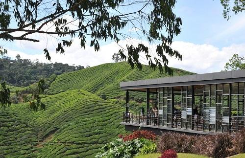 BOH Tea Plantation - Malaysia