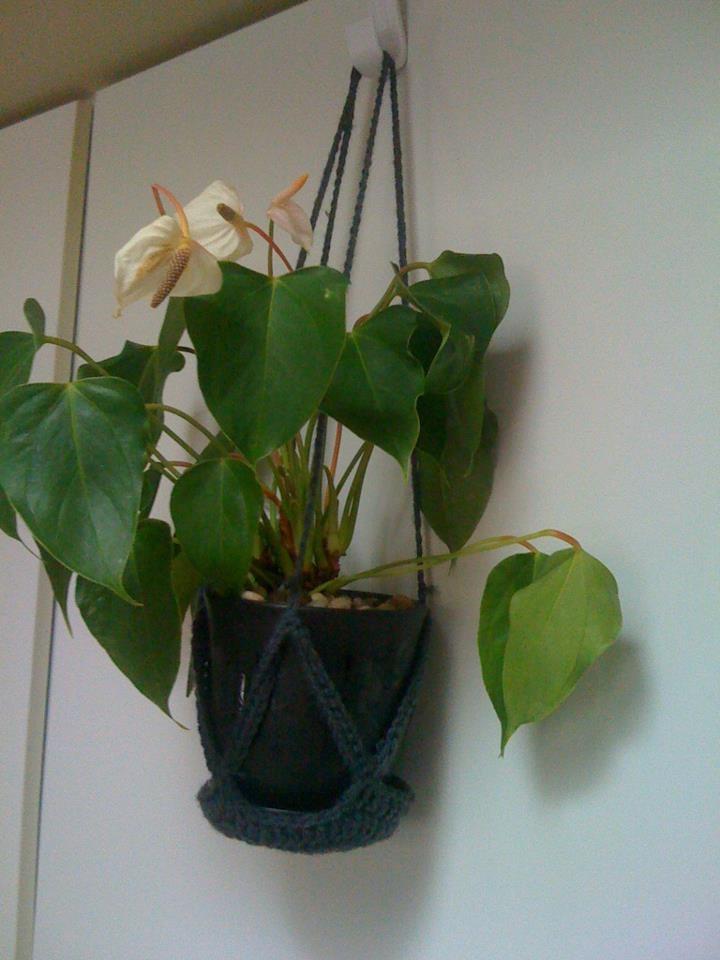 plants for office cubicle. Plant Holder To Keep My Desk Clear At Work :) Plants For Office Cubicle