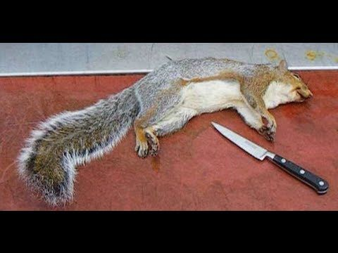 How To Skin And Clean A Squirrel.Grey Squirrel. : YouTube ▶ #Prepper