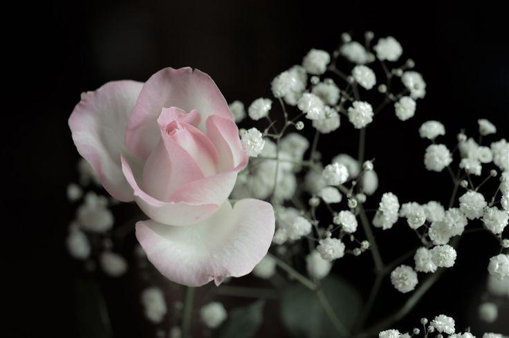 Daniela Serra for #RosesOpenWeekend