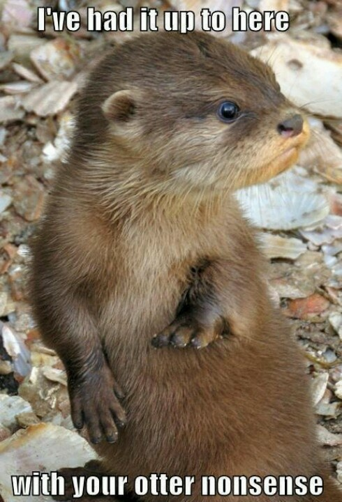 I don't know why but I think otters are really cute!