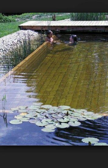 Schwimmteich. I like wood and acquatic plants..