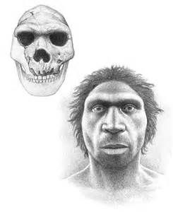The world's largest known sample of fossil humans has been classified as Homo Heidelbergensis but in fact they are early Neanderthals, according to a study by Prof Chris Stringer of the Natural History Museum. So, we continue to struggle with classifications when it comes to people?
