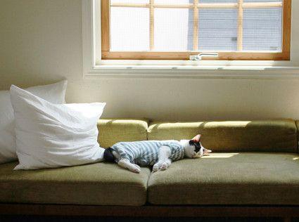 窓に向けてソファ置くのもいいけど窓際のソファも捨て難い。