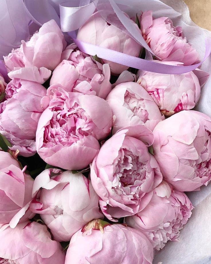 картинки нежно розовый пион