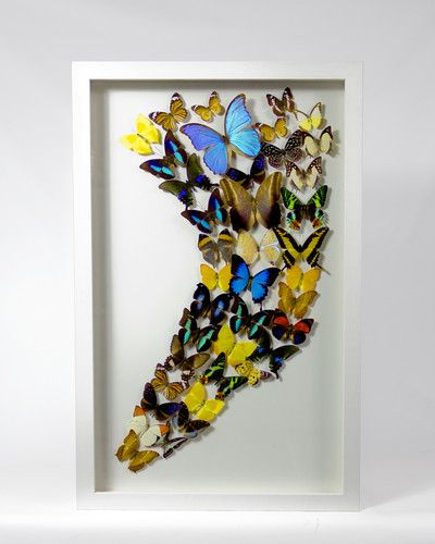Butterfly Display taxidermy butterflies case picture | eBay
