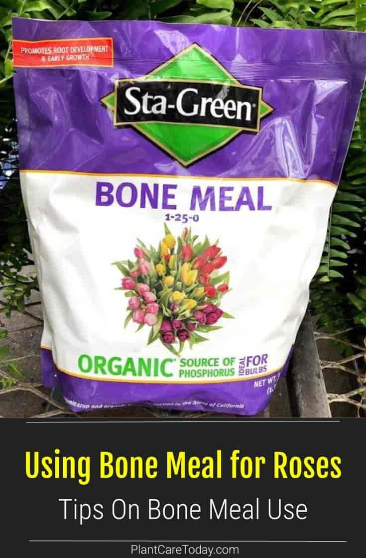 How To Use Bone Meal For Roses Plantcaretoday Organic Plant Fertilizer Bone Meal For Plants Fertilizer For Plants