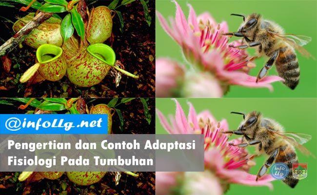 Contoh Adaptasi Fisiologi Pada Tumbuhan Dapat Terjadi Adaptasi Adalah Suatu Usaha Yang Dilakukan Oleh Makhluk Hidup Dalam Menyesuaikan Diri Adaptasi Hidup