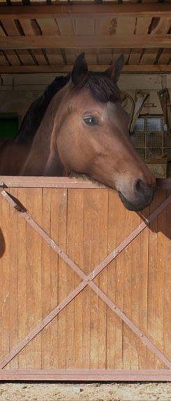 Meisjeskamer thema paarden met deze paarden deur poster
