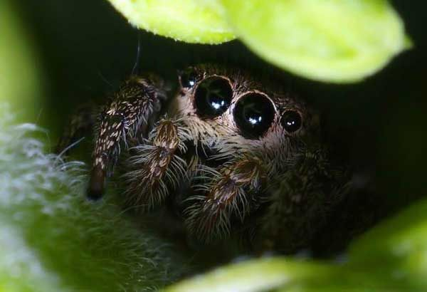 Sometimes even spiders can be cute
