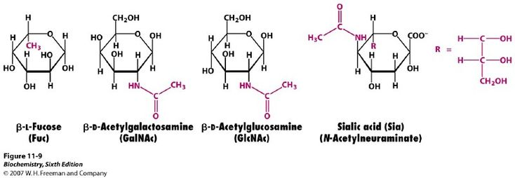 Amino Sugars - made by replacing a hydroxyl of a sugar with an amine group. Two common examples are beta-D-glucosamine and beta-D-galactosamine (see HERE). Common molecules derived from these include beta-D-N-acetylglucosamine, muramic acid, N-acetylmuramic acid, -D-N-acetylgalactosamine, and N-acetyl-neuraminic acid (also called sialic acid). Amino sugars are often found in oligosaccharides and polysaccharides.
