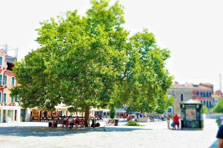 Santa Magherita Square #venice
