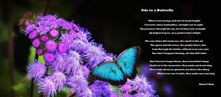 Ode To a Butterfly