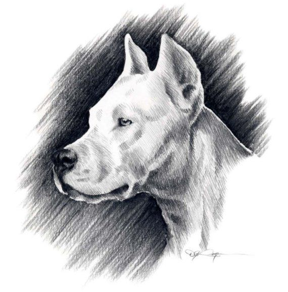 DOGO ARGENTINO Dog Art Print Signed by Artist DJ von k9artgallery