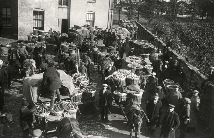 Fruitveilingen. De aanvoer van fruit in tenen manden voor de veiling in de Betuwe, met paard en wagen. 1919. Nederland.