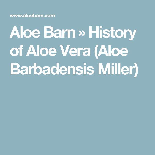 Aloe Barn » History of Aloe Vera (Aloe Barbadensis Miller)