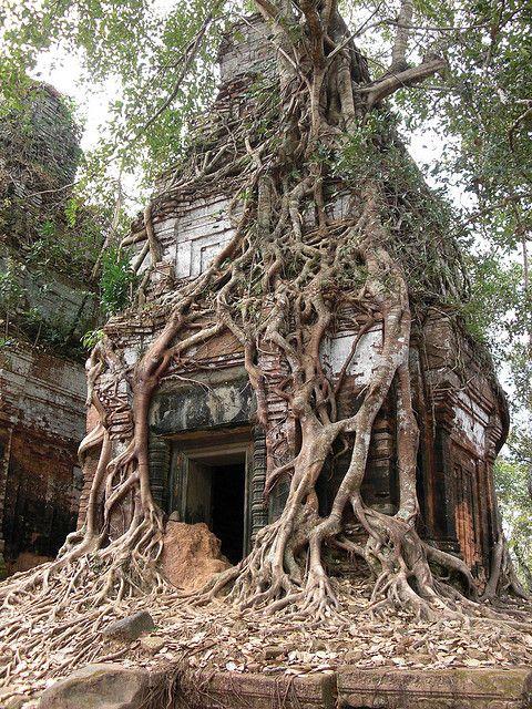 Koh Ker tower tree, Cambodia (by jumbokedama).