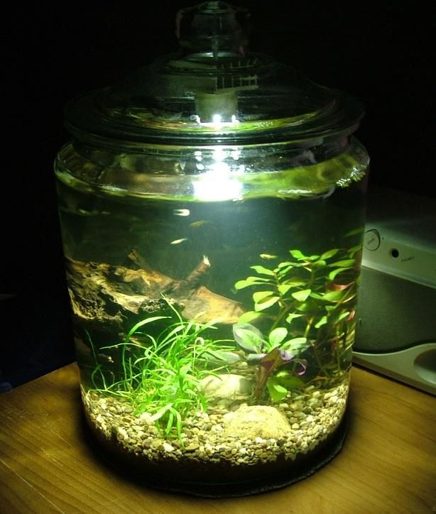 Water garden in a cookie jar gardens of water for Water garden fish tank