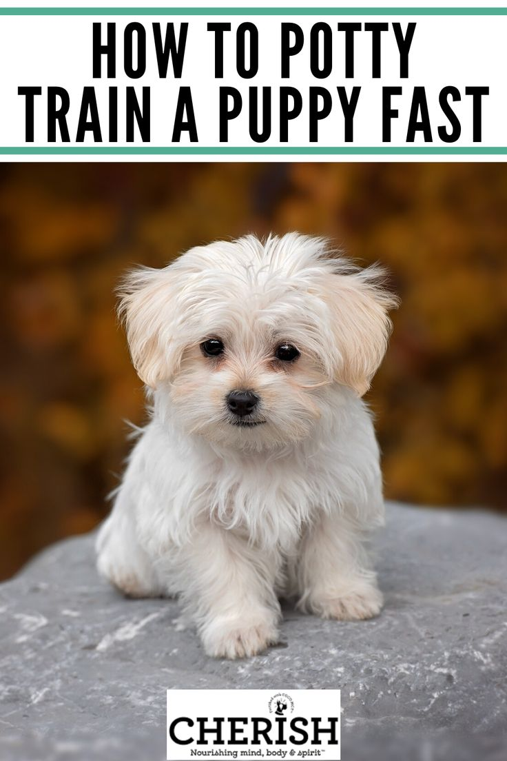 What Age Should A Puppy Be House Trained References