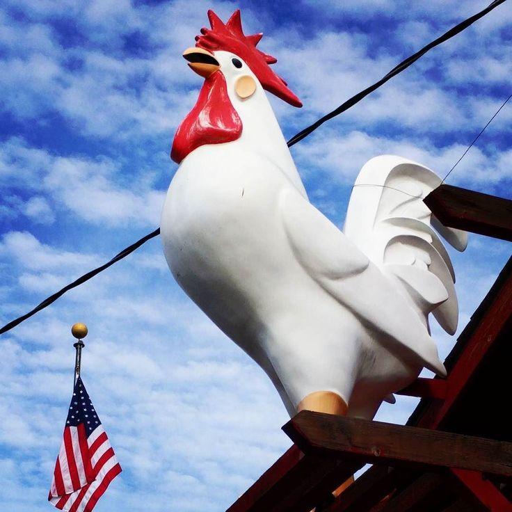 #murica #big #rooster #godbless #america #proud #bird #american #flag #oldglory #patriotic #cock #trump #chicken #encino #sfv #valley #la #losangeles