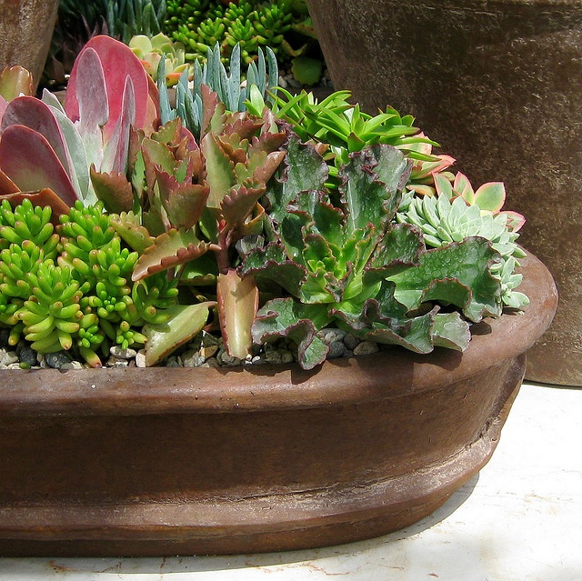 149 best ideas about cactus gardening on pinterest for Wooden cactus planter