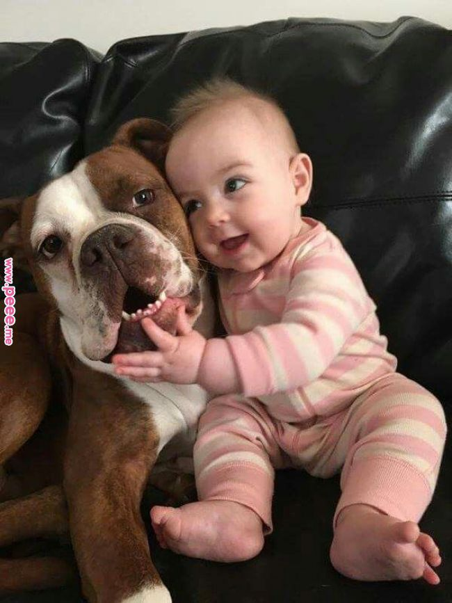 Pin By Gym Moga Punjab On Pitbulls Animals Baby Dogs Dogs Kids