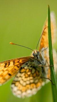 Motyl na trawce