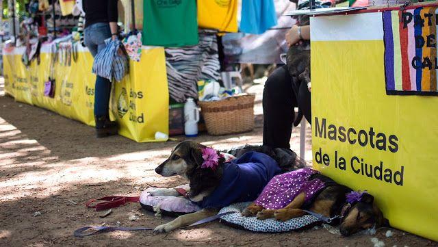 La Ciudad de Buenos Aires realiza una nueva jornada de mascotas   Buenos Aires 10 marzo de 2018.- El Ministerio de Ambiente y Espacio Público de la Ciudad a través de la Agencia de Protección Ambiental realiza la primera Jornada de Concientización por la Adopción de Mascotas desde las 15hs. hasta las 19hs. en Parque Rivadavia Caballito.  Las mascotas son un integrante más de las familias. Gracias a estas jornadas ayudamos a que durante todo el año pasado más de 400 perros y gatos rescatados…
