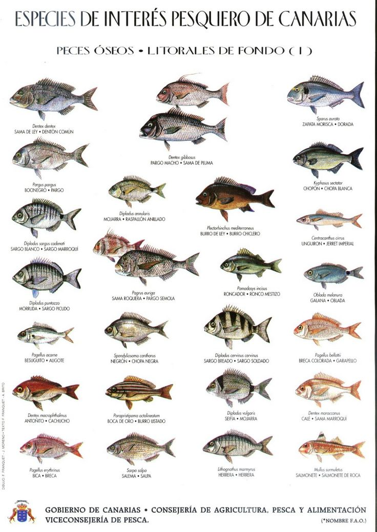 DIAS DE PESCA...!: Peces de las Islas Canarias (Gobierno de Canarias)