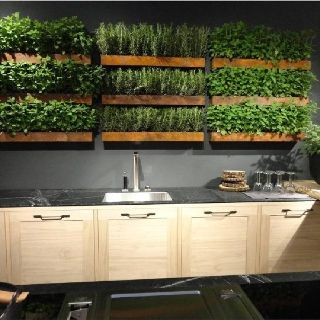 Great herb wall for a kitchen.