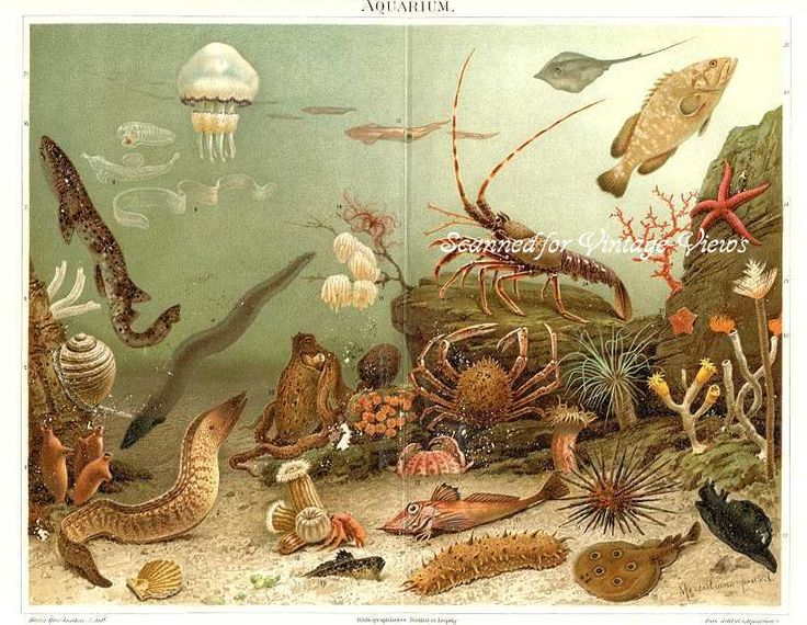 antique sea | SEA LIFE,SPONGES,STING RAY,STARFISH,EELS,SEA ANEMES