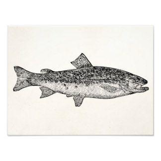 De vintage Vissen van de Geep - de Aquatische Foto Afdrukken