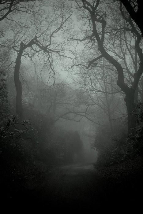 missexlibris:  Lacertine Forest by Donna Craddock