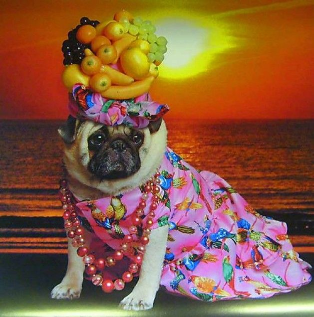 The 16 Most Shameful Pug Halloween Costumes